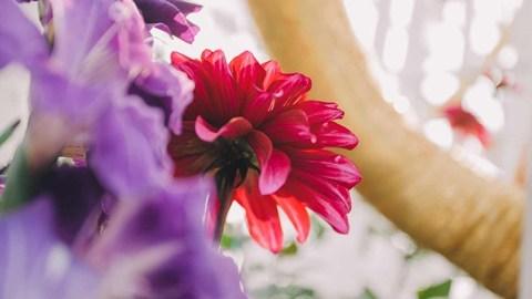Flowers Speak Louder Than Words